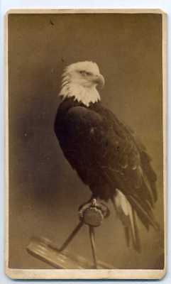 Civil War CDV- Old Abe, The Wisconsin War Eagle- Centennial Exhibition- 1876