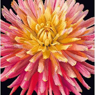 """Dahlia On Aida Counted Cross Stitch Kit 13""""X13"""" 18 Count 499994656063"""
