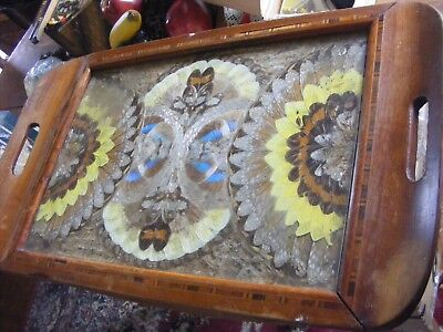 Vintage-Butterfly Wings Art Serving Inlaid Wood Serving Tray-Brazil?-Beautiful