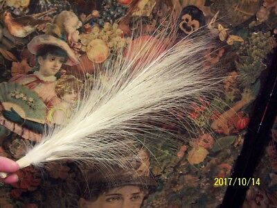 Antique feather.  15ins long.
