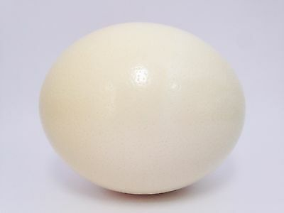 Genuine Ostrich Eggshell Grade A, for crafting, painting and Easter decoration