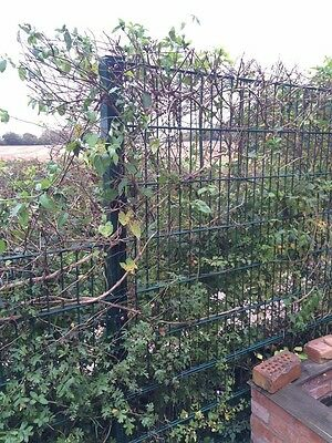 Welded mesh fencing panels - heavy duty - 2.5m x 1.2m, galvanised & green coated