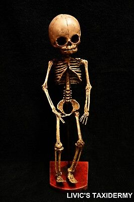 FETUS SKELETON gaff evil taxidermy spooky creepy  freakish circus sideshow  2