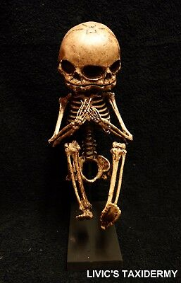 FETUS SKELETON gaff evil taxidermy spooky creepy  freakish circus sideshow  1