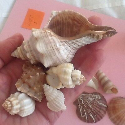 Collection Of Sea Shells/ Group 1.