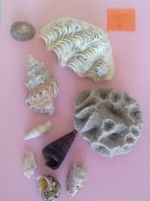 Collection Of Sea Shells/ coral Group 4