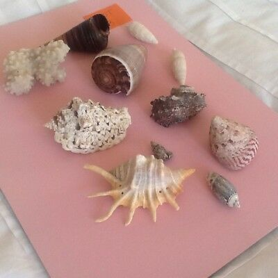 Collection Of Sea Shells/ Coral Group 3