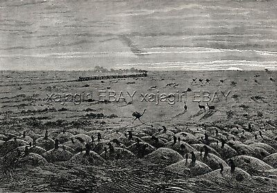 Alpaca, Rhea Prairie Dogs, Argentina Central Railroad Pampas Antique 1870s Print