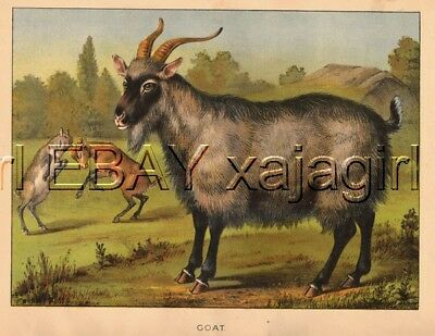 Goat with Kids Playing, HUGE Antique Folio Sized 1880s Chromolith Color Print