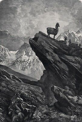 Guanaco Wild Llama Hunting, Large 1860s Antique Engraving Print & Article