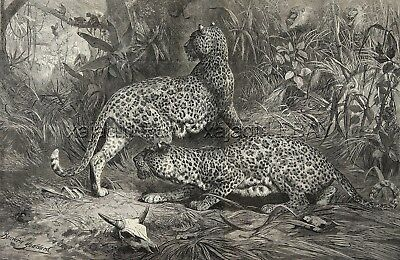 Leopards Baboon & Monkey, Spectacular Huge Double-Folio 1870s Antique Print
