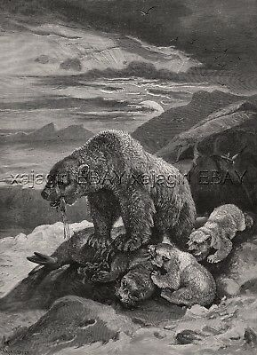 Polar Bear Mother & Cubs Feed on Seal Dramatic Sunset, Large 1880s Antique Print
