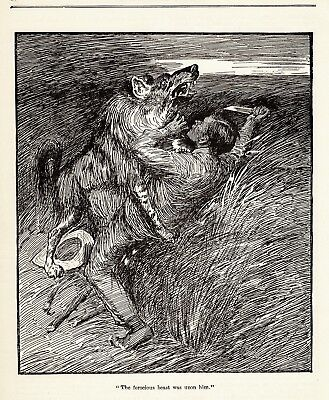 WOLF Attack, Versus Man with Knife, Dramatic Antique 1916 Print