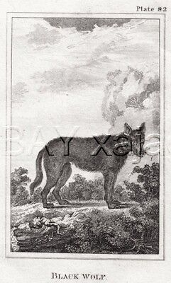 WOLF Timber Wolf Black, 1812 Copper Engraving Print