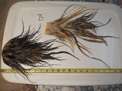 2 Barred Ginger Dk Grizzly Rooster Saddle Hackle Dry Fly Tying Hair Feathers 75