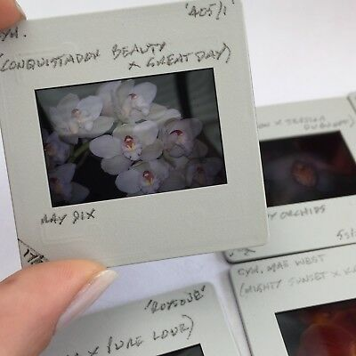 Photo Slides Photo Negatives Film Negatives In Cases - Art Craft - ORCHIDS LOT 8
