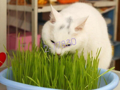 1Bag 30g Harvested Cat Grass approx 800 Seeds Organic Cat snack Plant Seed