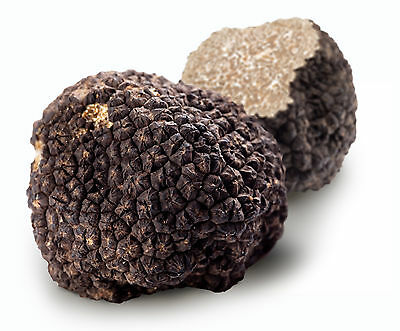 1.59oz 45g fresh black Winter Burgundy TRUFFLE T. uncinatum ITALY трюфель الكمأة