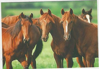 Horse Postcard - Young friends