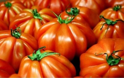 100 seeds red tomato Marmande vegetable hot rare quality fruit organic plant