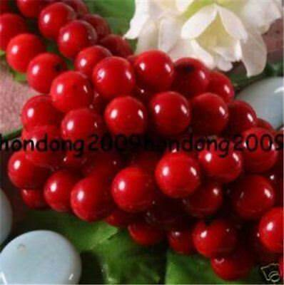 """Natural 8mm Red Sea Coral Gemstone Round loose Beads 15"""""""