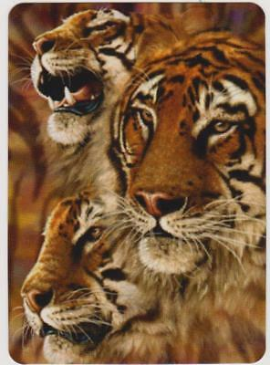 Swap/Playing Card ~ BEAUTIFUL TIGER FACES ~ Modern Wide x 1