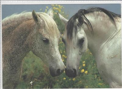Horse Postcard- Greys - covers a lot of meaning-Fleabitten to Silver