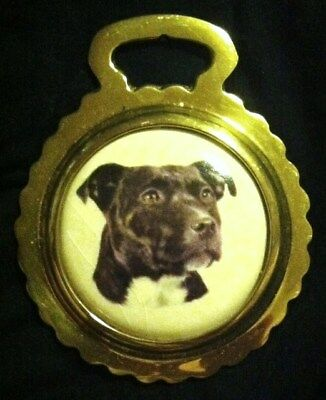 STAFFORDSHIRE BULL TERRIER DOG NEW Ceramic Horse Brass STAFFIE! WOW YOUR WALLS!