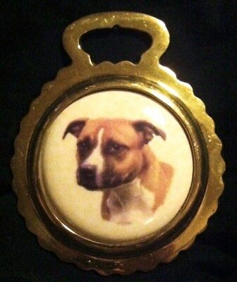 DOG AMERICAN STAFFORDSHIRE TERRIER NEW Ceramic Horse Brass DOG!! WOW YOUR WALLS!