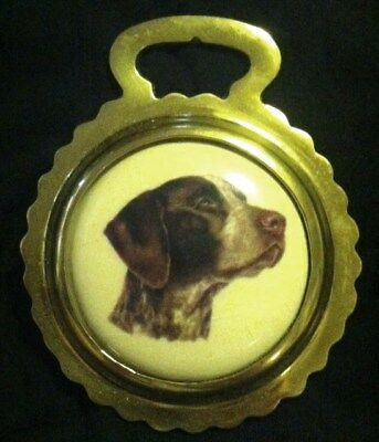 NEW DOG GERMAN SHORTHAIRED POINTER Ceramic Horse Brass DOG gift! WOW YOUR WALLS!
