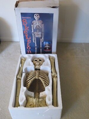 New Halloween Prop 5.5 Ft Life Size Decorative Hanging/Poseable Skeleton Costco