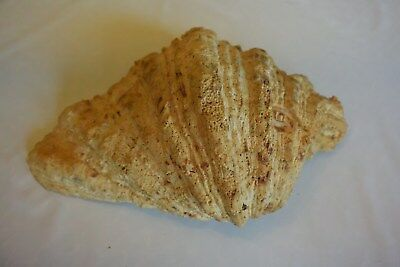 Magnifique Ancien coquillage corail old fossil shells nacre  fair models 19 XIX