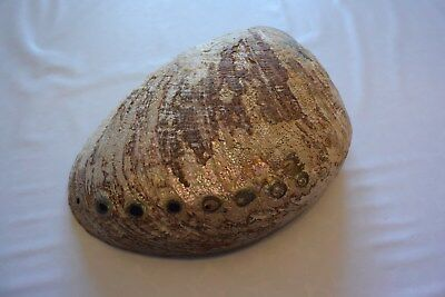 Magnifique Ancien coquillage corail old fossil shells nacre  fair models 8 XIX