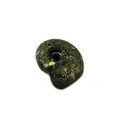 1Pcs Rare Product 21MM Russian Pyrite Ammonite Fossil Jewelry Gemstone GS00821
