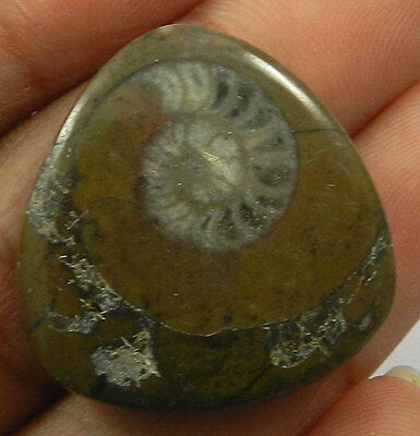 36.80Cts NATURAL BROWN AMMONITE FOSSIL 25X26MM FANCY CABOCHON JEWELRY GEMSTONE
