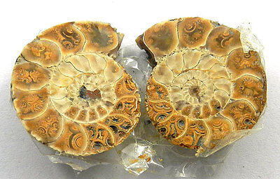 5.62 GM! 1 Pair NATURAL AMMONITE FOSSIL 23x19mm Loose Gemstone Making Jewelry