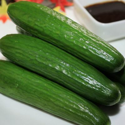 Heirloom 20 Dutch Cucumber Seeds NON-GMO delicious Garden Vegetable C100