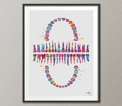 Teeth Chart Watercolor Print Tooth Anatomical Art Dental Clinic Dentistry Decor