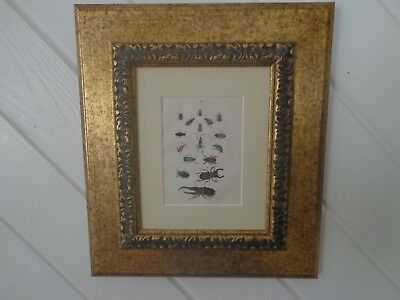 Antique 19Th Century Framed Original Print Of Insects And Beetle By Martin 1876