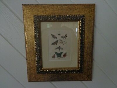 Antique 19Th Century Framed Original Print Of Butterflies/mothes By Martin 1876