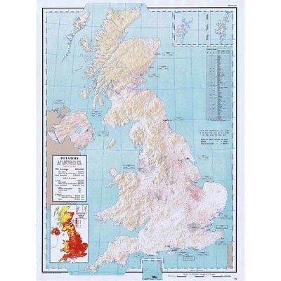 BRITISH ISLES Potatoes Acreage and Production in 1955 - Vintage Map 1963