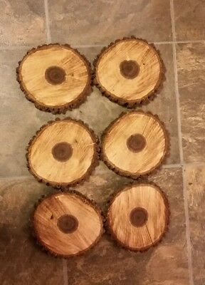 "LOT OF 6 Fresh Black Walnut Slabs Slice Tree Trunk 6"" x 1"" Rustic Wood"