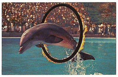 PORPOISE Jumping CIRCLE OF FIRE Postcard Vintage Marineland of Pacific CA CLOSED