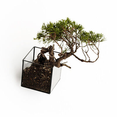 10¹² Terra Hanging Void - Glass Wall-Mountable Vase Planter
