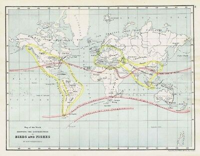 Distribution of Birds and Fishes in the World -Antique World Map c1870 by Weller