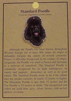 Hat Pin Lapel Pins Standard Poodle Dog  Free Shipping   Bin