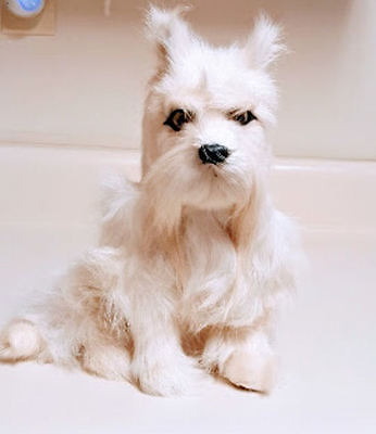 Schnauzer Small White Sitting Cropped Ears Goat Hair Furry Christmas SALE