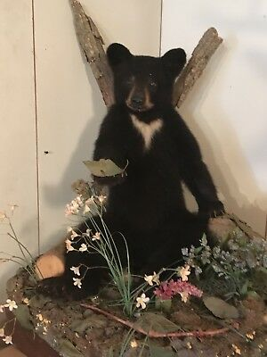 Black Bear Cub Mount