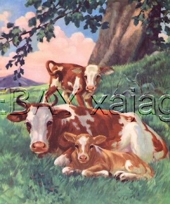 Cow & Calves, Red & White, Large Vintage CHILDREN's Print, 70+ Yeas Old