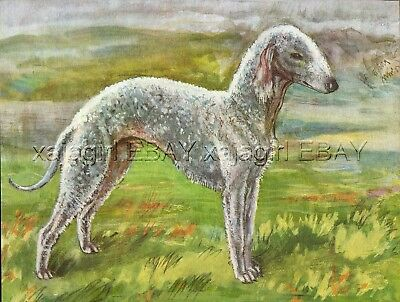 DOG Bedlington Terrier, Beautiful 1930s Color Linen Print by Vere Temple